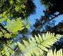 Qigong in der Natur